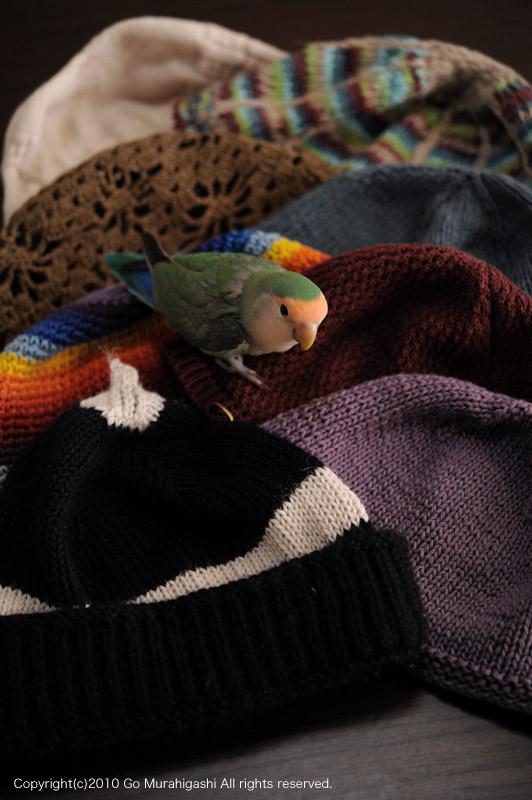 f:id:photosgo:20101129002145j:image:w450
