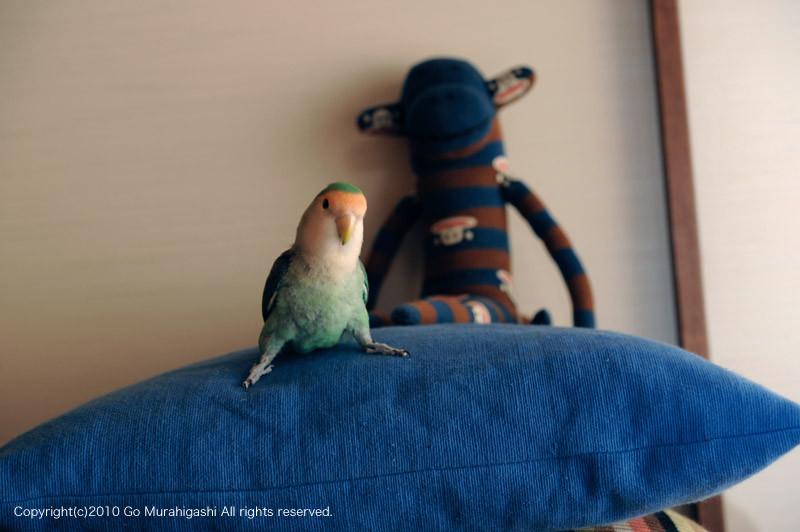 f:id:photosgo:20101201133021j:image:w450