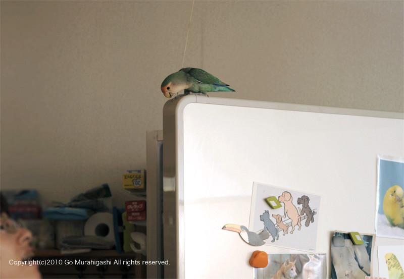f:id:photosgo:20101214152902j:image:w450