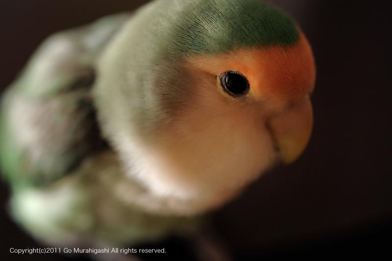 f:id:photosgo:20110107135717j:image:w450