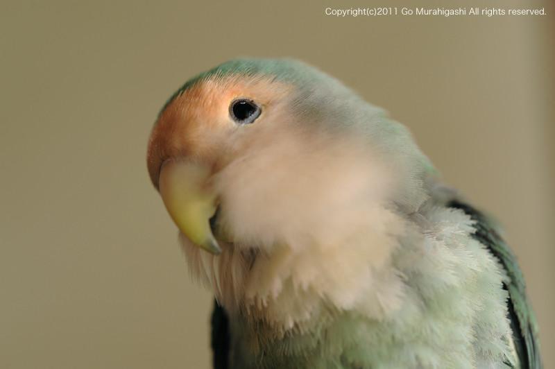 f:id:photosgo:20110124212640j:image:W450