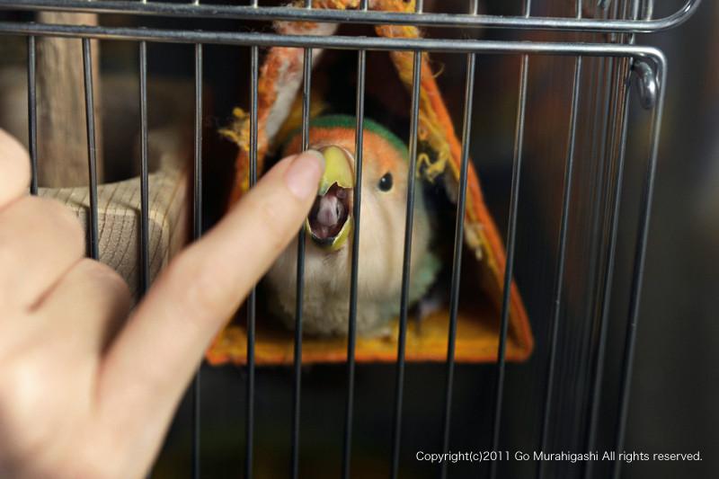 f:id:photosgo:20110223134417j:image:w450