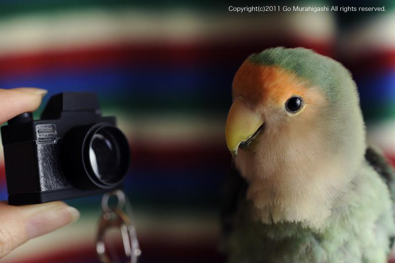 f:id:photosgo:20110310153441j:image:W450