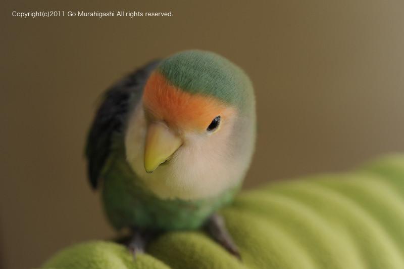f:id:photosgo:20110323224328j:image:w450