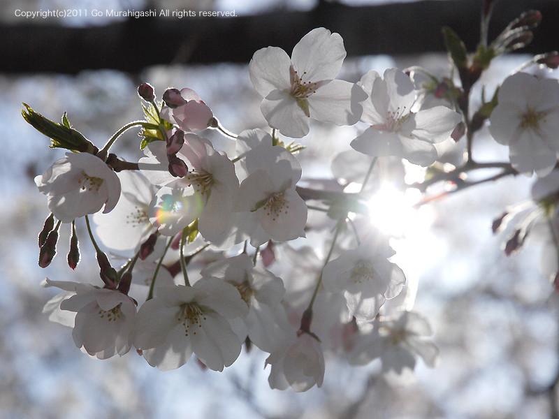 f:id:photosgo:20110407133907j:image:w450