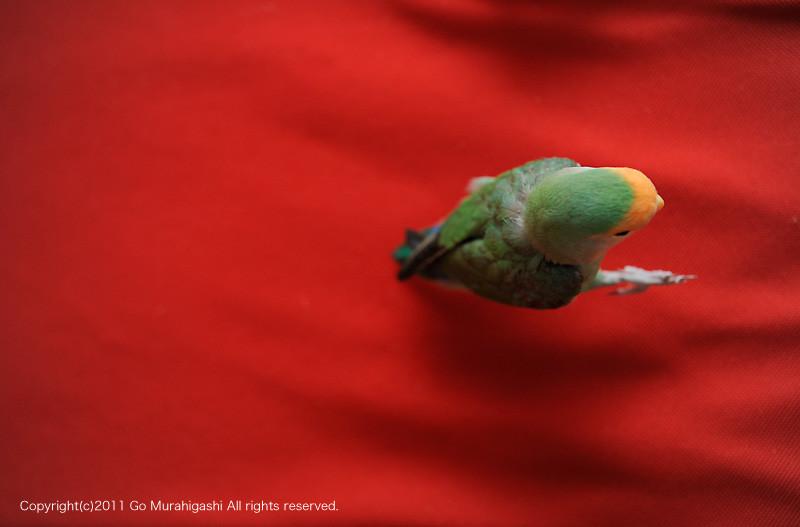 f:id:photosgo:20110527131346j:image:w450