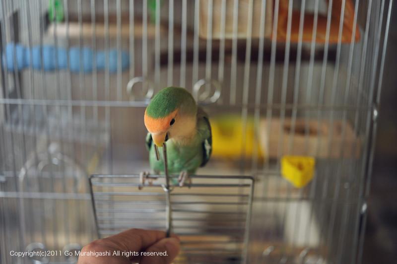 f:id:photosgo:20110530124602j:image:w450