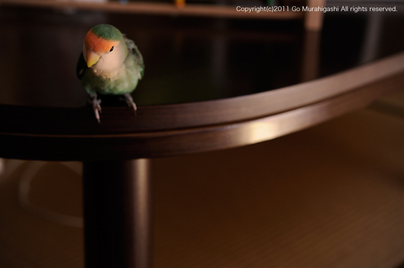 f:id:photosgo:20110608125044j:image:W450