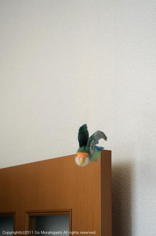 f:id:photosgo:20110703130057j:image:w450