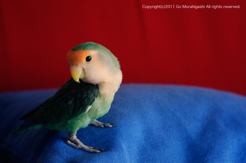 f:id:photosgo:20110708121019j:image:w450