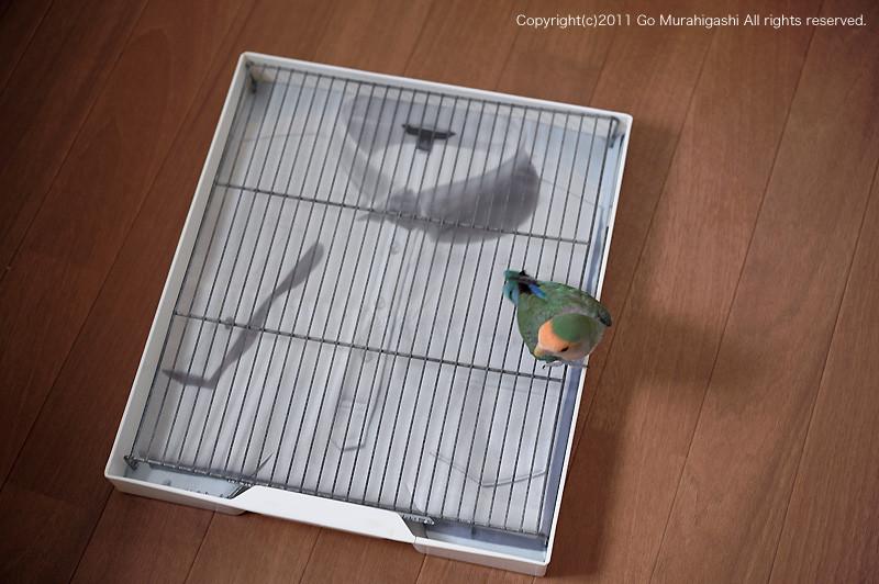 f:id:photosgo:20110727170234j:image:w450