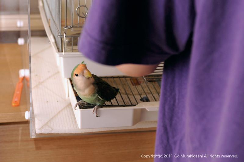 f:id:photosgo:20110901180648j:image:w450