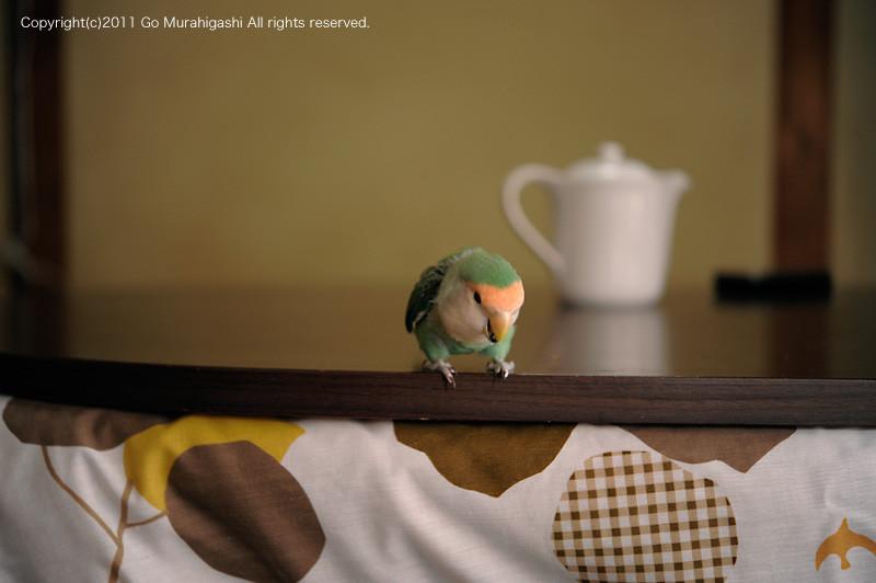 f:id:photosgo:20111114144032j:image:w450