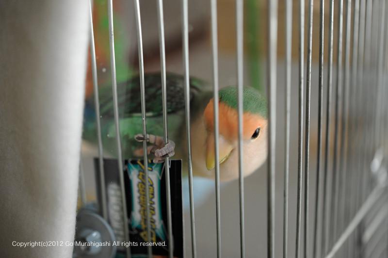f:id:photosgo:20120125154619j:image:w450