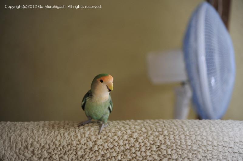 f:id:photosgo:20120625170302j:image:w450