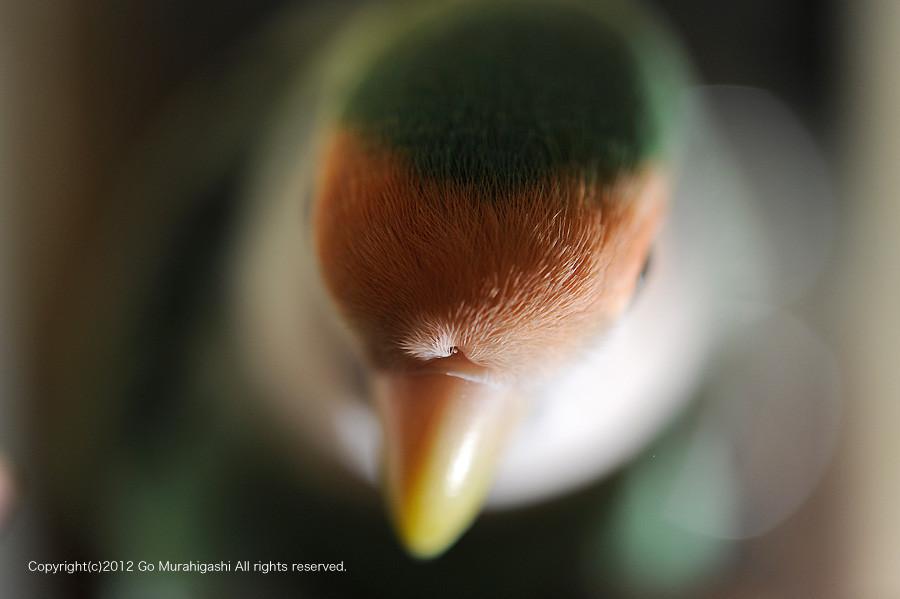 f:id:photosgo:20120814161100j:image:w450