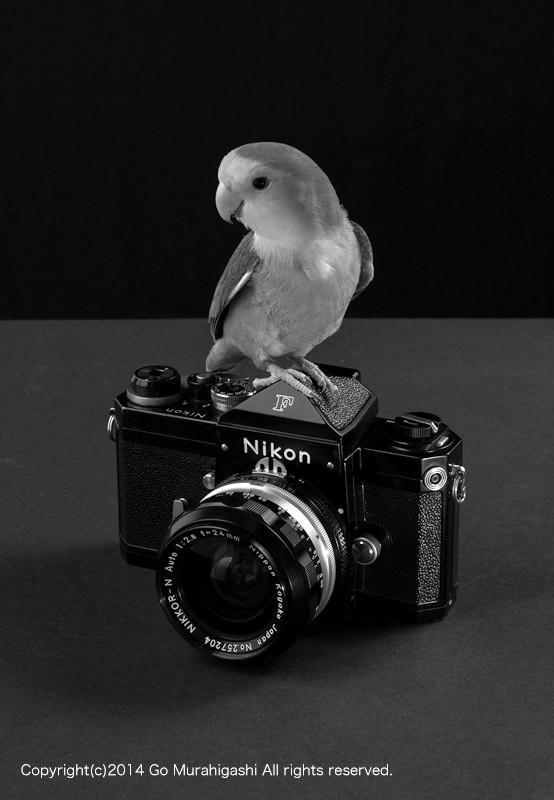 f:id:photosgo:20140102012447j:image:W450