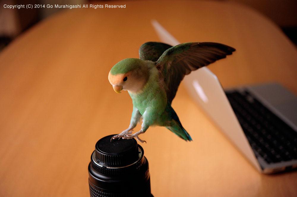 f:id:photosgo:20141209001945j:image:w450