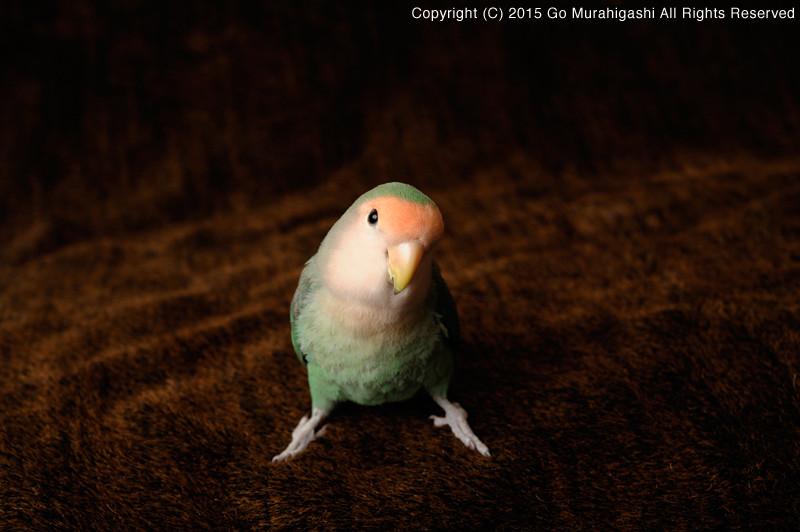 f:id:photosgo:20150302223625j:image:w450