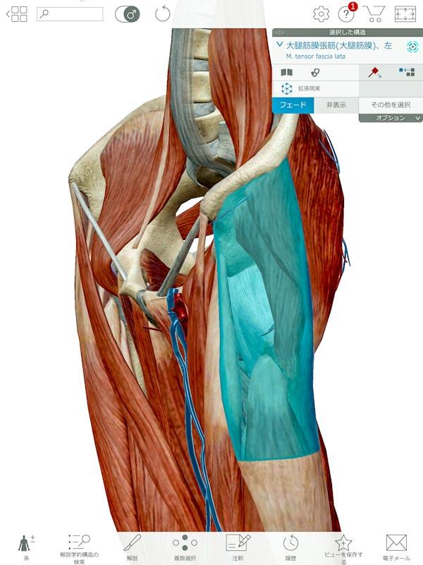 f:id:physicaltherapist-k-blog:20171027120657j:plain