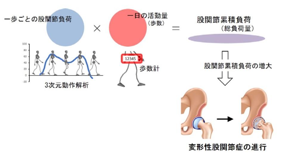 f:id:physicaltherapist-k-blog:20180521215029j:plain