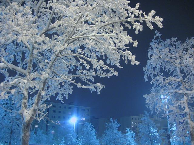 街路樹と樹氷