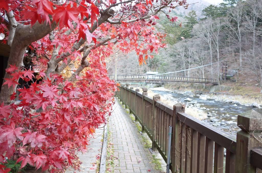 箒川上流を望む(紅の吊橋が見える)