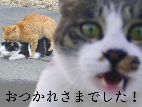 f:id:picard_monhan:20151212182255j:image