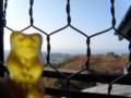 くまと琵琶湖
