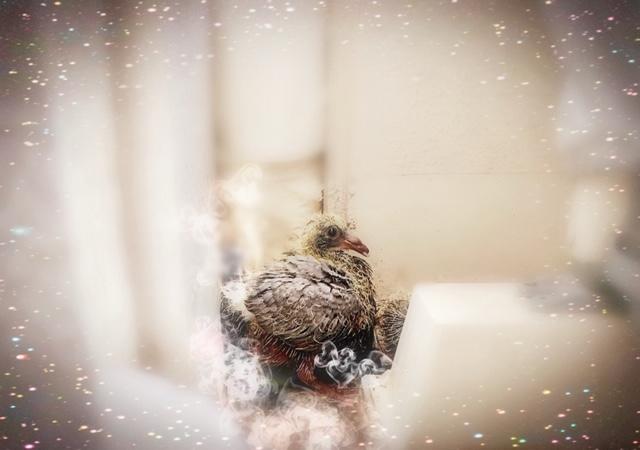 f:id:pigeon_pipipopo:20190719205944j:plain