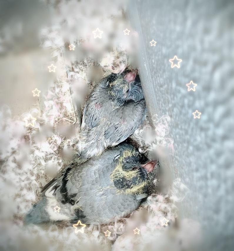 f:id:pigeon_pipipopo:20190725222857j:plain