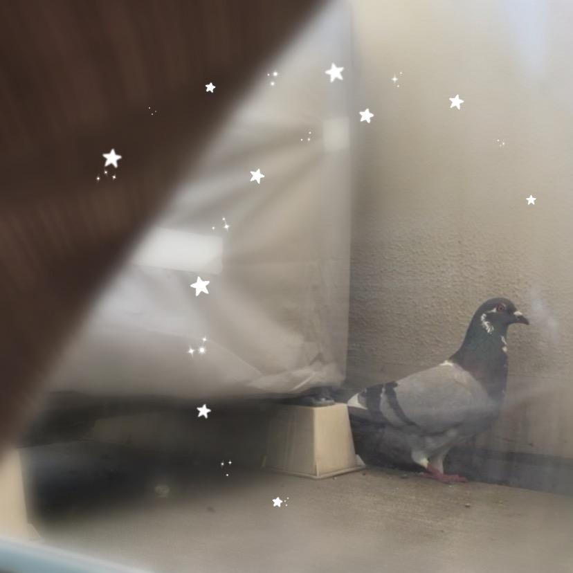 f:id:pigeon_pipipopo:20190728231808j:plain