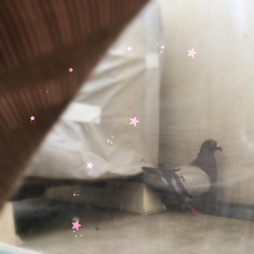 f:id:pigeon_pipipopo:20190728232115j:plain