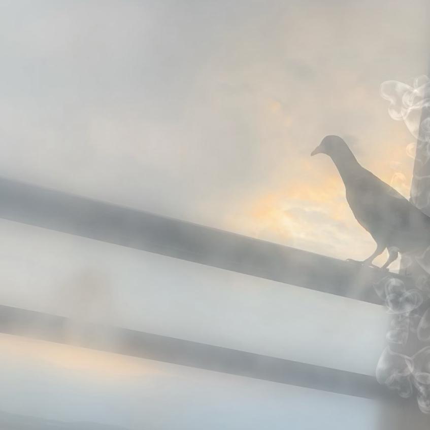 f:id:pigeon_pipipopo:20190816231605j:plain