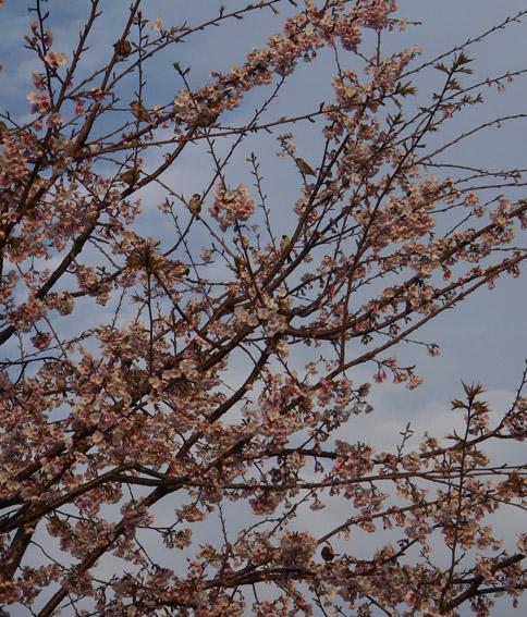 f:id:pikasasa105:20110320164803j:image