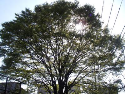 f:id:pikasasa105:20110412152059j:image