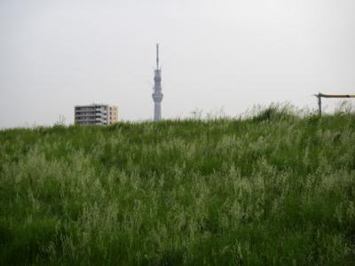 f:id:pikasasa105:20110504174624j:image
