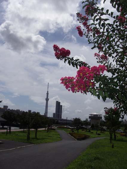 f:id:pikasasa105:20120918112232j:image