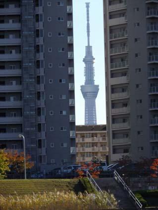 f:id:pikasasa105:20121116123746j:image