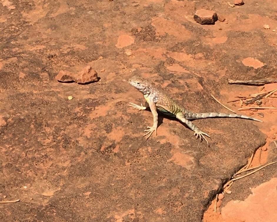a lizard inhabiting the vortex