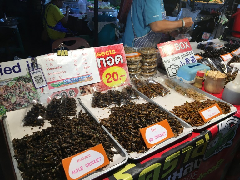 Insect snacks