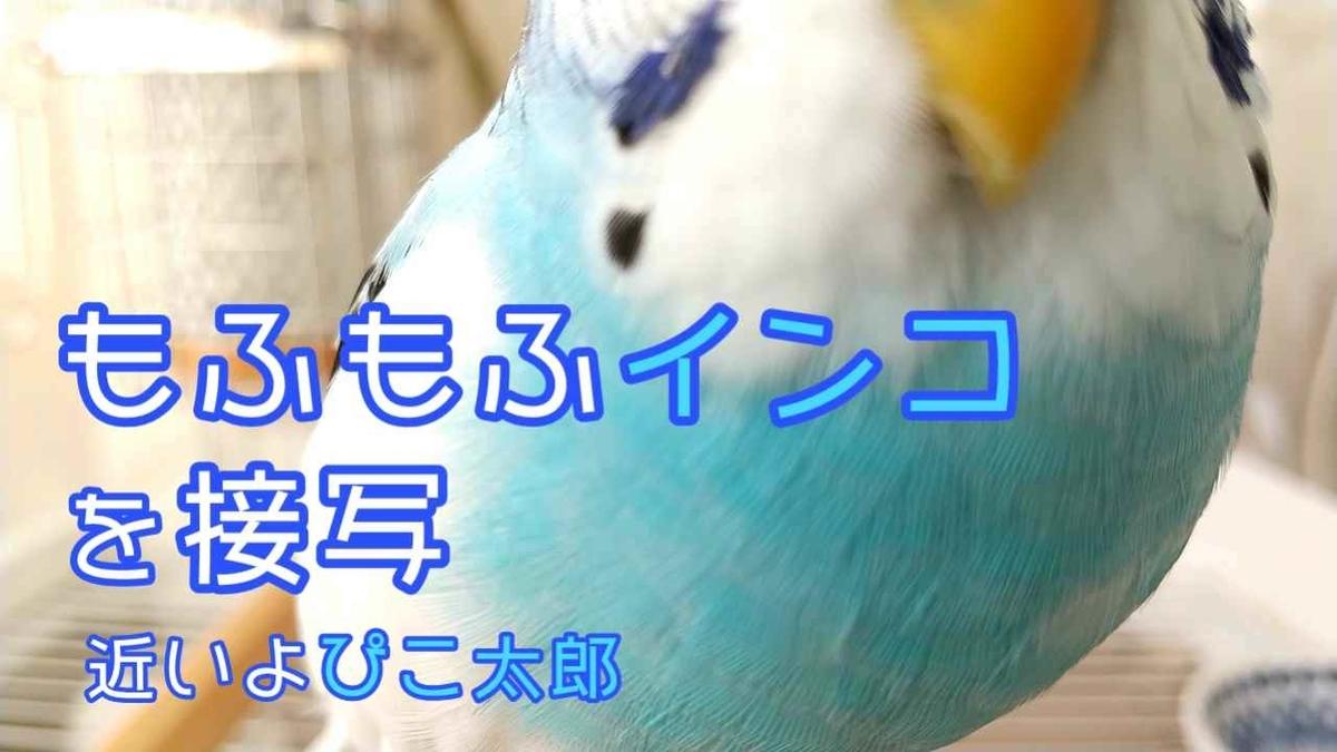 f:id:piko-taro:20201219160647j:plain