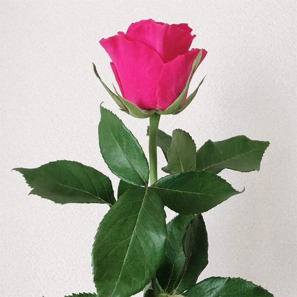 f:id:pink8er-hana:20200330124457j:image