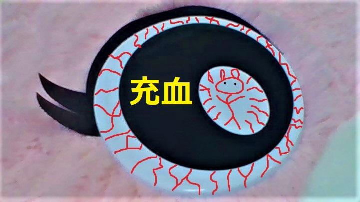 f:id:pinkchanusagi:20210226091417j:plain