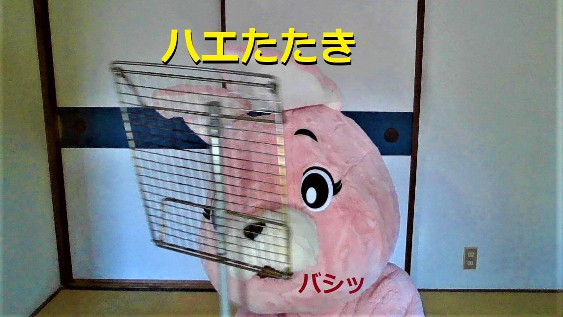 f:id:pinkchanusagi:20210730110314j:plain