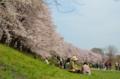 京都新聞写真 緑のシートで花見