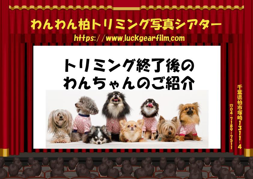 f:id:pinkfloyd411toto:20200329102858j:plain