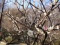 [梅][公園]赤塚公園(城址地区)