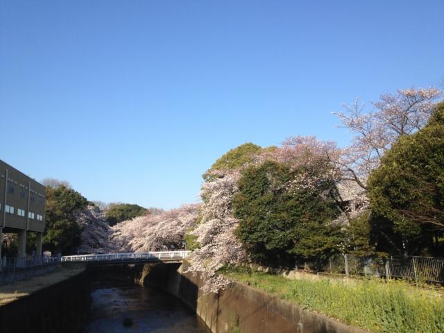 石神井川@中之橋