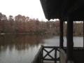 [公園][三宝寺池]石神井公園 三宝寺池